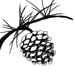 Dancing Pines Illustration 3