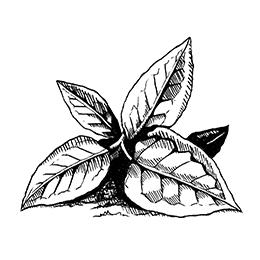 Dancing Pines Illustration 1